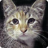Adopt A Pet :: TT - Brooklyn, NY