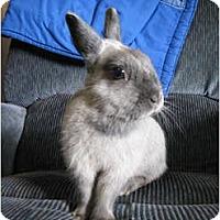 Adopt A Pet :: Zinka - North Gower, ON