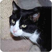 Adopt A Pet :: Boots - Markham, ON