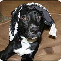 Adopt A Pet :: Emily - Concord, CA