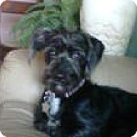 Adopt A Pet :: TESS - RENO, NV
