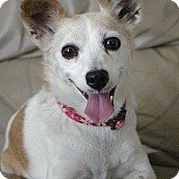 Adopt A Pet :: Angel - Sacramento, CA