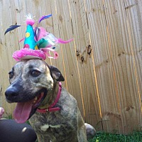 Adopt A Pet :: Lita - Lake Charles, LA