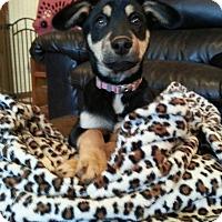 Adopt A Pet :: Delta - Seneca, SC