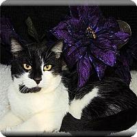 Adopt A Pet :: Nick - Columbia, MD