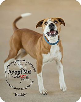 Hound (Unknown Type) Mix Dog for adoption in Union Springs, Alabama - Buddy