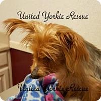Adopt A Pet :: Hannah - Lancaster, TX