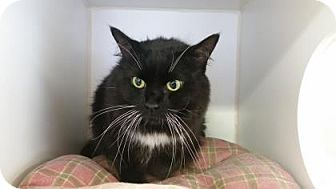 Domestic Longhair Cat for adoption in Reisterstown, Maryland - Aliyah