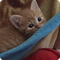 Adopt A Pet :: Honey - Barrington, NJ