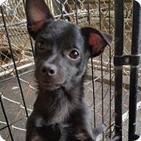 Adopt A Pet :: SAMMY - Gustine, CA