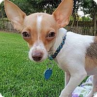 Adopt A Pet :: Faye - AUSTIN, TX