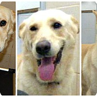 Adopt A Pet :: MARTY - Rootstown, OH