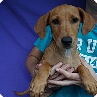 Adopt A Pet :: Quartz - Oviedo, FL