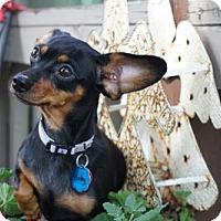 Adopt A Pet :: Baby - Sioux Falls, SD
