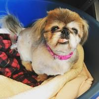 Adopt A Pet :: Cinnabon - San Francisco, CA