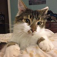 Adopt A Pet :: Wilson - Eureka, CA