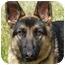 Photo 2 - German Shepherd Dog Dog for adoption in Los Angeles, California - Lena von Malibu