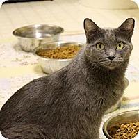 Domestic Shorthair Cat for adoption in Denver, Colorado - Niyama
