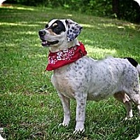 Adopt A Pet :: Millie - Flowery Branch, GA