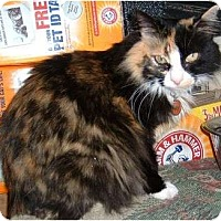 Adopt A Pet :: Zen-Zen - Farmington, AR