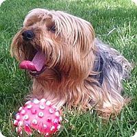 Adopt A Pet :: Gregorio - Orange, CA