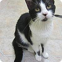 Adopt A Pet :: Shaggy - Mobile, AL