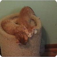 Adopt A Pet :: Golden Tigers - Richfield, OH