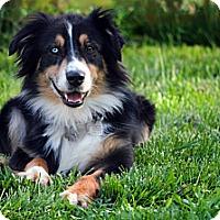 Adopt A Pet :: Iris - Washington, IL