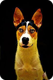 Hound (Unknown Type) Mix Dog for adoption in Fort Smith, Arkansas - Jane