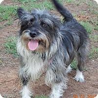Adopt A Pet :: GWEN - Mission Viejo, CA