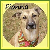 Adopt A Pet :: Fionna - Raleigh, NC