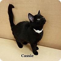 Adopt A Pet :: Cassie - Bentonville, AR