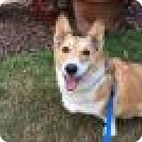 Adopt A Pet :: Boomer - Lomita, CA