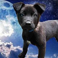 Adopt A Pet :: A217341 - Fairfield, CA