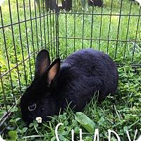 Adopt A Pet :: Shady - Elizabethtown, KY