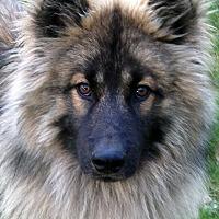 Adopt A Pet :: Finnegan - Los Altos, CA