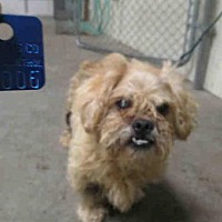 Adopt A Pet :: GEORGE - Olivette, MO