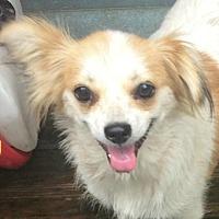 Adopt A Pet :: Mitzi - Boston, MA