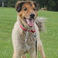 Adopt A Pet :: CHIEF - Dublin, OH