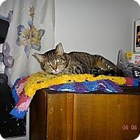 Adopt A Pet :: Susie - Saint Albans, WV