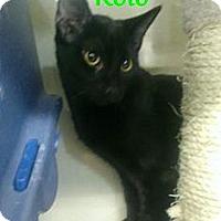Adopt A Pet :: Rolo - Chandler, AZ