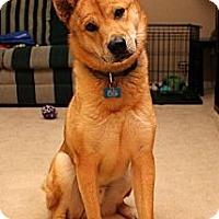 Adopt A Pet :: Miso - Centennial, CO