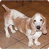 Adopt A Pet :: Diego - Phoenix, AZ