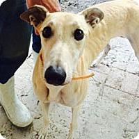 Adopt A Pet :: Quan - Pearl River, LA