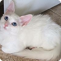 Adopt A Pet :: Patty - Harrisburg, NC