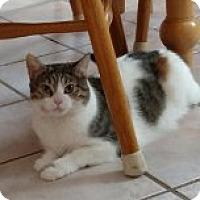 Adopt A Pet :: Lucy - Delmont, PA