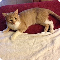 Adopt A Pet :: Jax - Columbia, MD