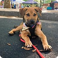 Adopt A Pet :: Aidan - Alpharetta, GA