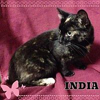 Adopt A Pet :: India - Buffalo, IN
