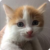 Adopt A Pet :: Randall - St. Louis, MO